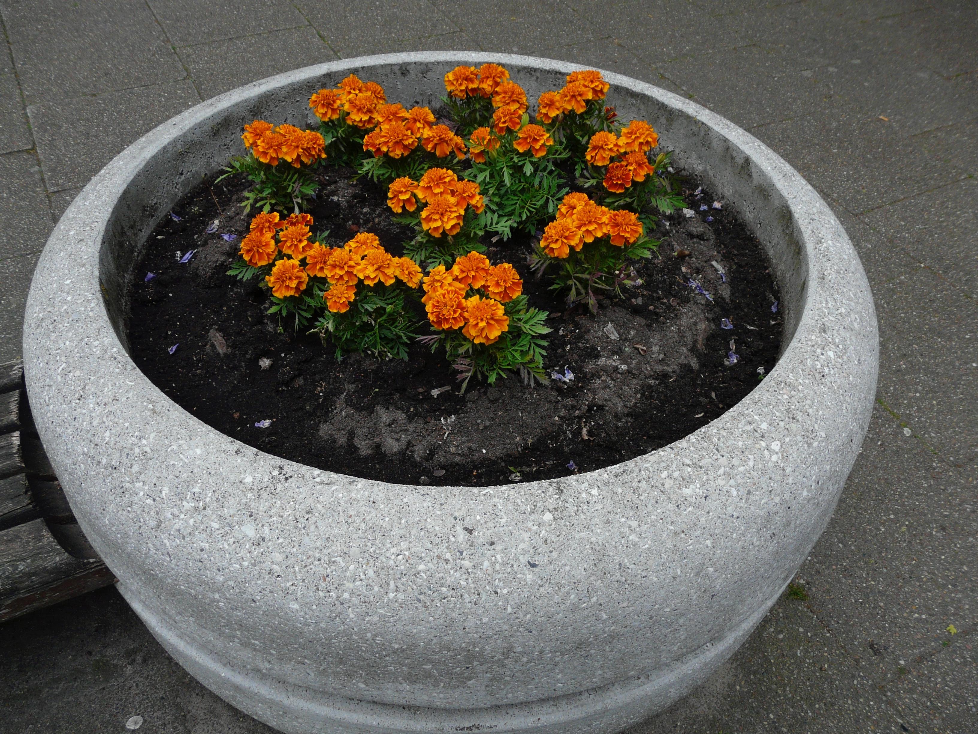 hbo -Die Blumenkübel im Zentrum Neugraben müssen weg. Wer will sie haben?