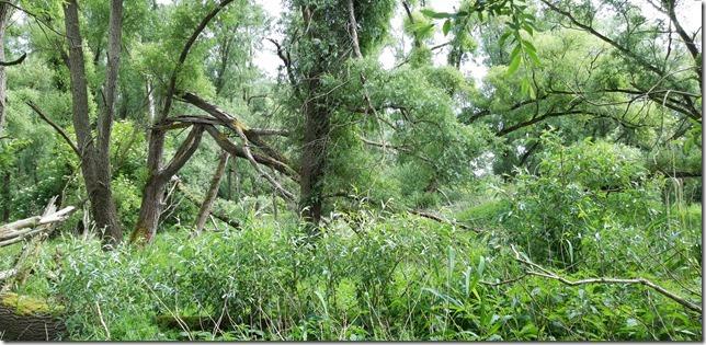 W. Marsand -Die Klimainitiative Vollhöfner Wald fordert vom Senat die sofortige Einstufung der Grünfläche als schutzwürdig